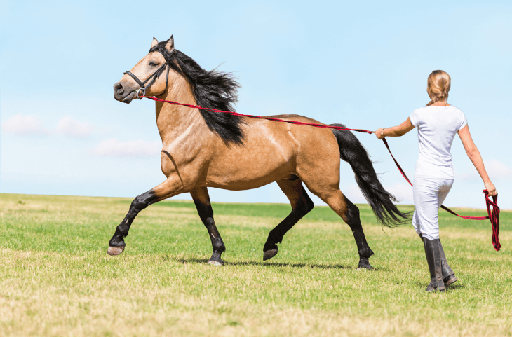 Horse Coaching and Education