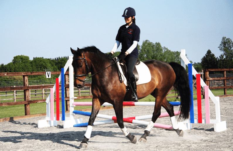 train your horse to perform a few simple tricks on your own