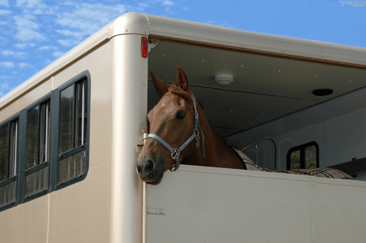 Horse transportation guideline